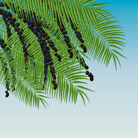 Background with acai berries and acai palm. Superfood. 10 eps Illustration