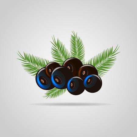 Black acai berry flat icon with palm leaves. vector illustration of eco food 10 eps