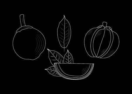 chupa-chupa, South American sapote. Zapote delicious fruit. Quararibea cordata. exotic Eco food 10 eps Illustration