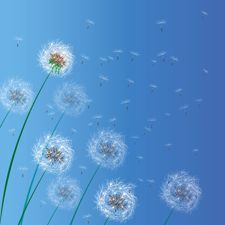 Vector illustration of spring background with white dandelions. Dandelion seeds blowing from stem. 10 eps Stock Illustratie