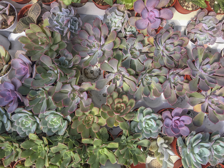 Selective focus and top view variety of Miniature succulent plants. Stock Photo