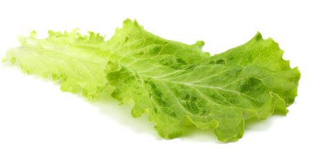 one salad leaf  isolated on a white background Stock Photo