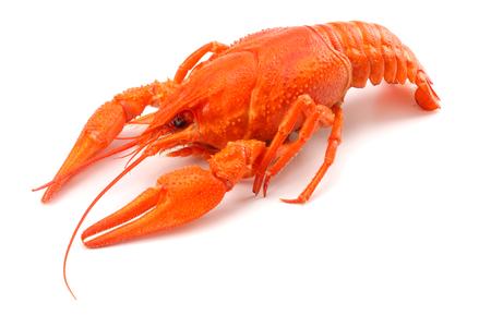 crawfish isolated on white background.