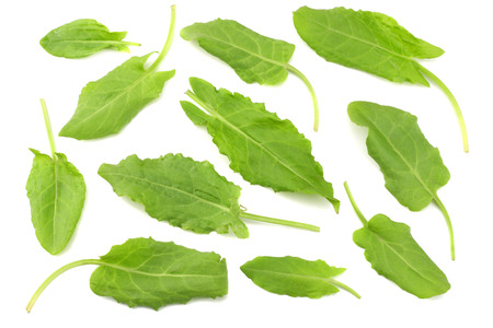 fresh sorrel, garden sorrel, rumex acetosa, green leaves, isolated on white background. Top view 版權商用圖片