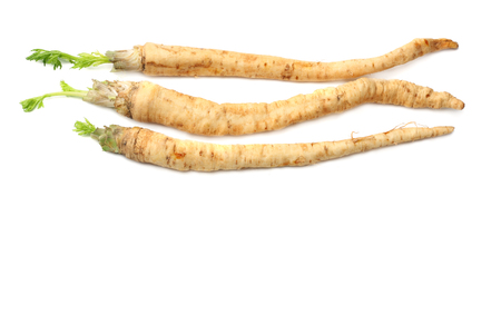 fresh parsley root isolated on white background