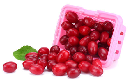 dogwood berries in pink box isolated on white background
