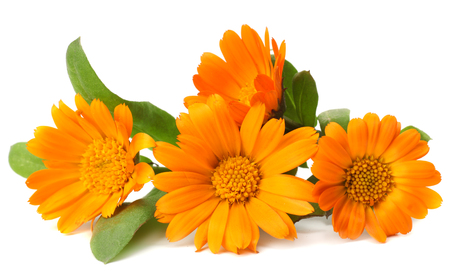 marigold flowers with green leaf isolated on white background ( calendula flower ) Zdjęcie Seryjne