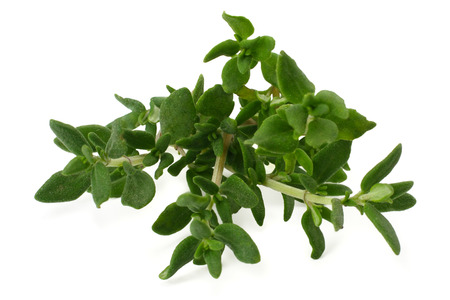 green thyme bunch isolated on white background