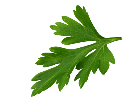 green fresh parsley leaf isolated on white background. macro Reklamní fotografie