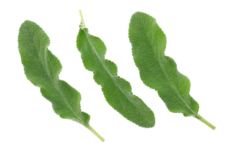 sage leaves isolated on white background. top view