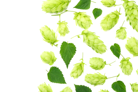 Hop cones isolated on white background. Beer brewing ingredients. Beer brewery concept. Beer background. Top view 版權商用圖片