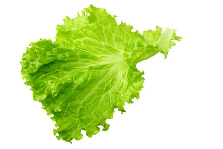 one salad leaf isolated on a white background