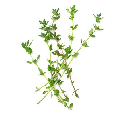 bouquet de thym vert isolé sur fond blanc. vue de dessus