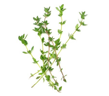 green thyme bunch isolated on white background. top view