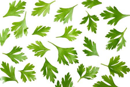 green fresh parsley leaves isolated on white background top view