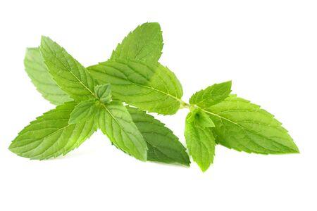 Fresh mint leaves isolated on white background Stock fotó