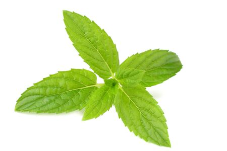 Fresh mint leaves isolated on white background. top view Stock fotó