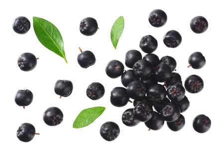 Chokeberry with green leaves isolated on white background. Black aronia. Top view.