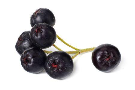 Chokeberry isolated on white background. Black aronia