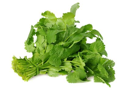 Bunch of fresh coriander leaves isolated on white background. Coriandrum sativum.