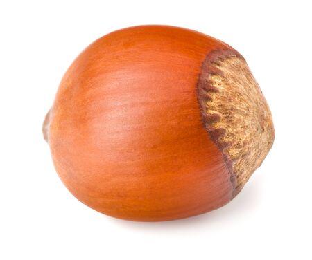 hazelnut isolated on white background macro