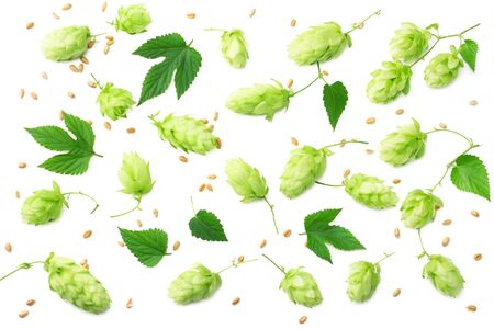 Hop cones isolated on white background. Beer brewing ingredients. Beer brewery concept. Beer background. Top view Archivio Fotografico