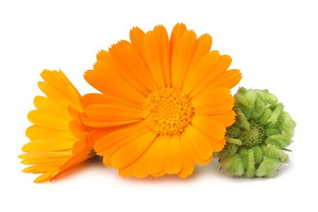 marigold flowers with green leaf isolated on white background. calendula flower.