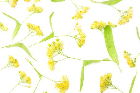 Linden flowers isolated on a white background. top view Archivio Fotografico