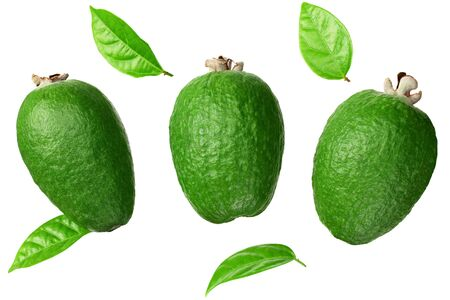 Tropical fruit feijoa isolated on white background. Acca sellowiana