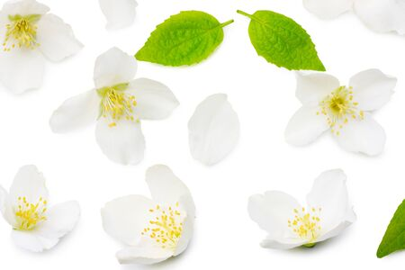 Jasmine flowers isolated on white background. top view Stock Photo