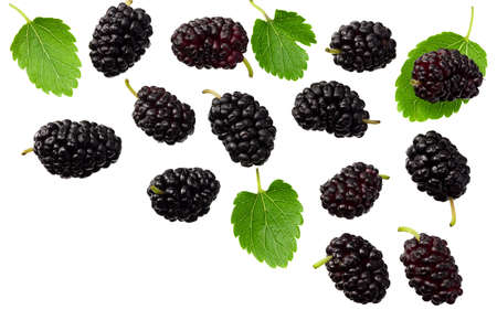 Mulberry berry with leaf isolated on white background. flat lay. top view Standard-Bild - 151529439