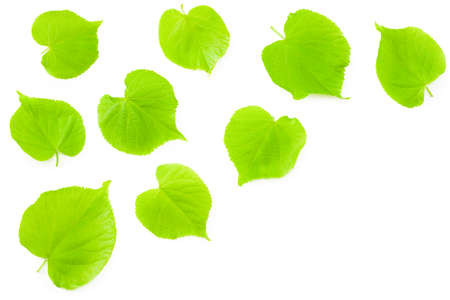 Linden flowers isolated on a white background. top view Banque d'images