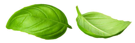 spinach leaves isolate on white background. Healthy food. Top view.
