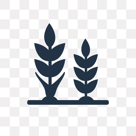 Wheat vector icon isolated on transparent background, Wheat transparency concept can be used web and mobile