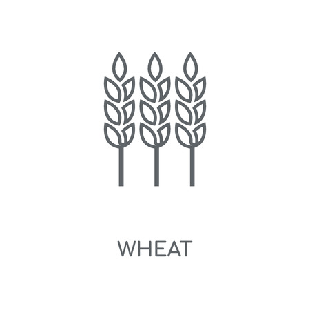 Wheat linear icon. Wheat concept stroke symbol design. Thin graphic elements vector illustration, outline pattern on a white background, eps 10.