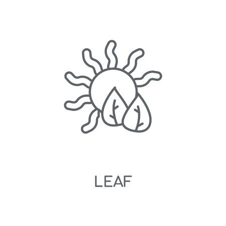 Leaf linear icon. Leaf concept stroke symbol design. Thin graphic elements vector illustration, outline pattern on a white background, eps 10.