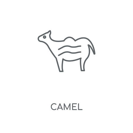 Camel linear icon. Camel concept stroke symbol design. Thin graphic elements vector illustration, outline pattern on a white background, eps 10.