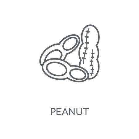 Peanut linear icon. Peanut concept stroke symbol design. Thin graphic elements vector illustration, outline pattern on a white background, eps 10.