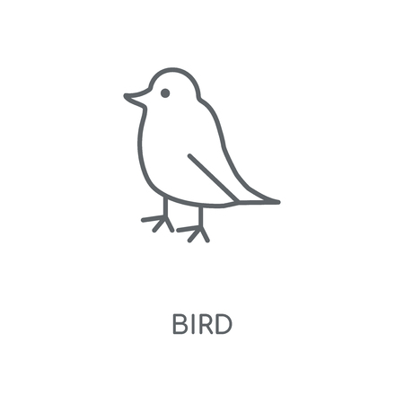 Bird linear icon. Bird concept stroke symbol design. Thin graphic elements vector illustration, outline pattern on a white background