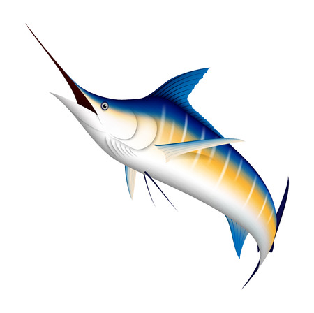 pez vela: Realista azul Marlin pescado Vectores
