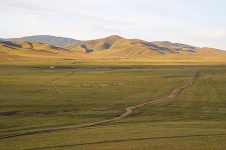 beautiful view on mongolian mountains with alone tree photo