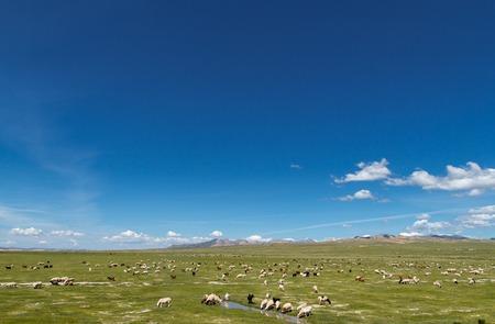 Beautiful view on mongolian mountains with sheeps photo