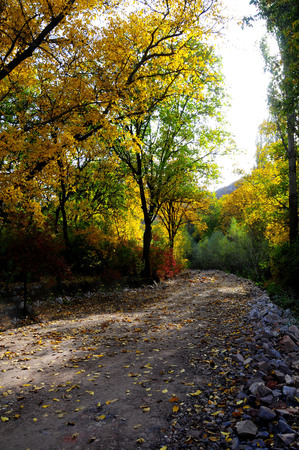 Autumn scenery with yellow, green and red shinning leaves in the forest Stock Photo