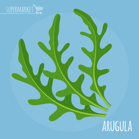kale: Arugula flat design vector icon. Flavor spices and herbs menu template collection. Illustration