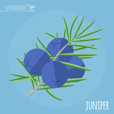 Juniper flat design vector icon. Flavor spices and herbs menu template collection.