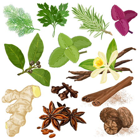 Spices. menu icon set. Dill, parsley, coriander, rosemary, marjoram, basil, mint, bay leaves, vanilla, cloves, cinnamon, star anise, ginger and nutmeg hand drawn realistic symbols. Illustration