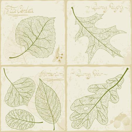 Herbario de la vendimia. Ilustración de vector de colección de esqueleto de hoja de estilo retro.