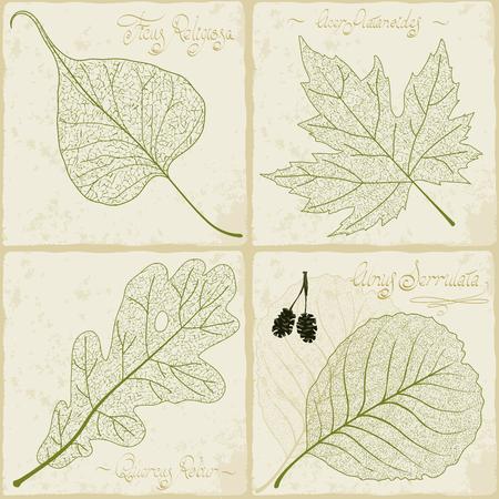Vintage herbarium. Vector illustration of retro style leaf skeleton collection. Ilustración de vector