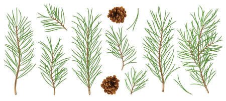 Detiled and realistic set of Christmas tree branches. Symbol and design elements vector collection for Christmas and New Year design.
