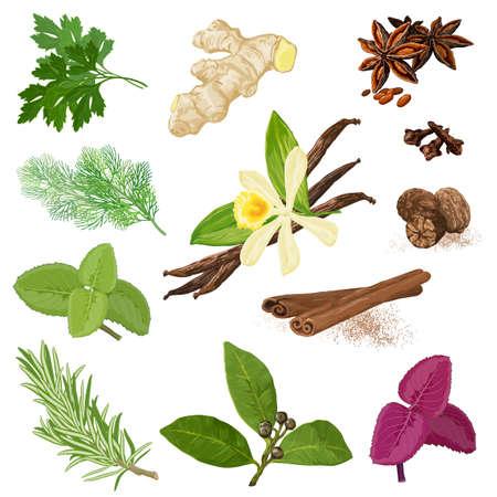 Spices. Vector menu icon set.